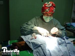 Dr Ingarden w czasie operacji