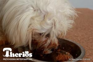 Kasia dzień po operacji zespolenia wrotno-obocznego zajada swój pierwszy posiłek
