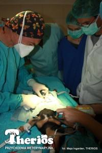 Dr Jacek Ingarden w licznej asyście operuje Lakiego.
