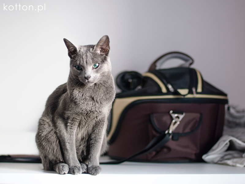 podróż z kotem