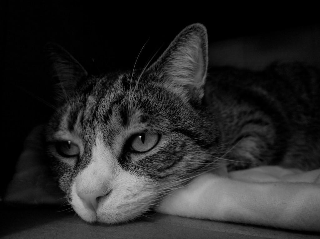objawy choroby u zwierząt