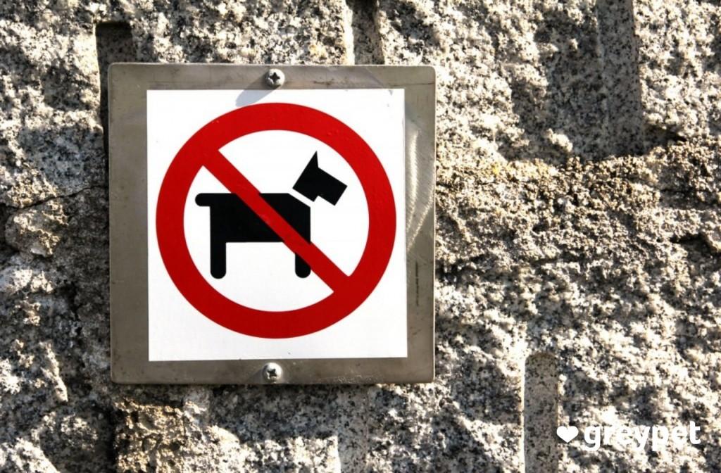 czy mogę wejść z psem