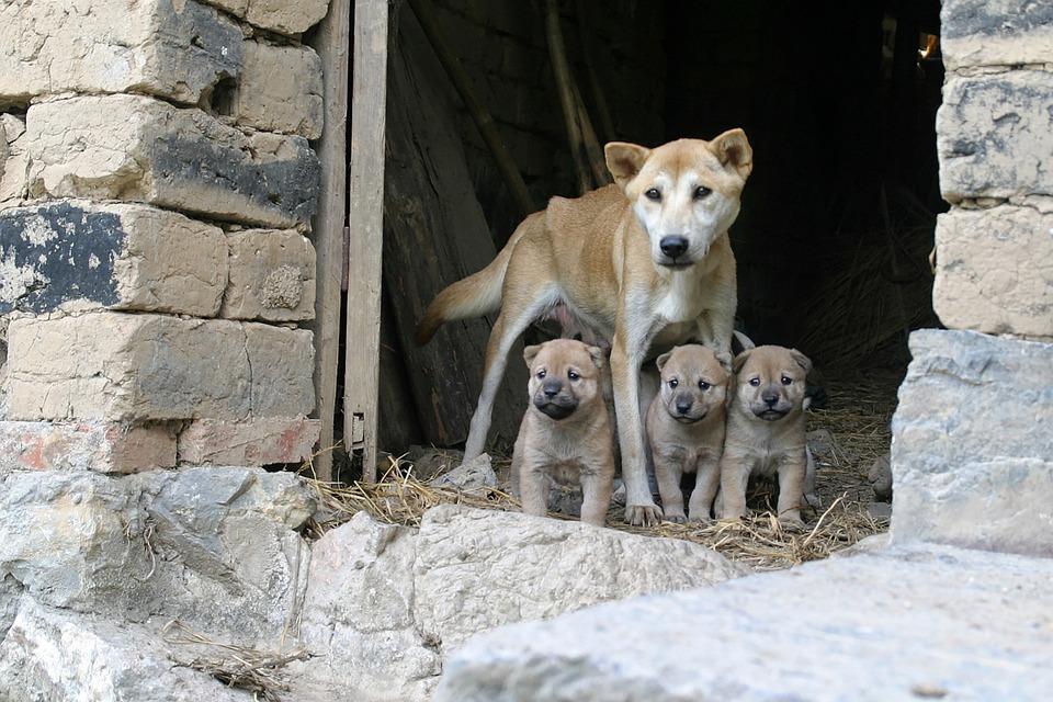 Dlaczego nie warto kupować psów i kotów z pseudohodowli?