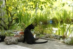 kot wychodzący