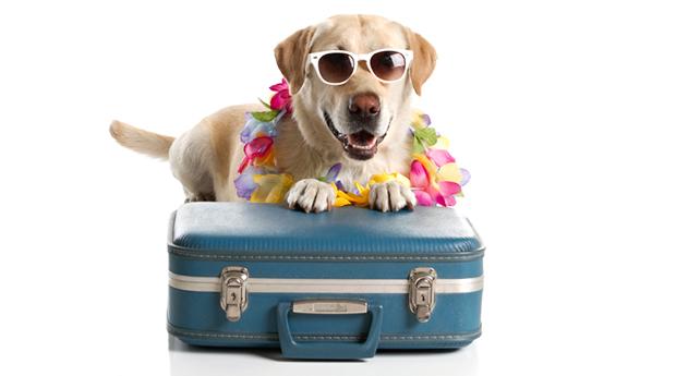 podróż ze zwierzakiem