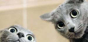 jak zrozumieć kota