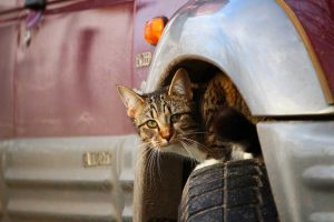 schowek dla kota