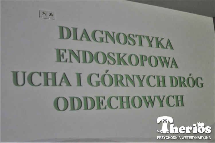 Endoskopia w THERIOSie z doktorem Skrzypczakiem