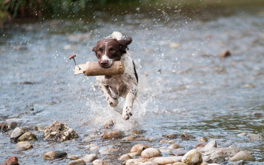 Zespół psich natręctw i obsesji (Canine Compulsive Disorder)