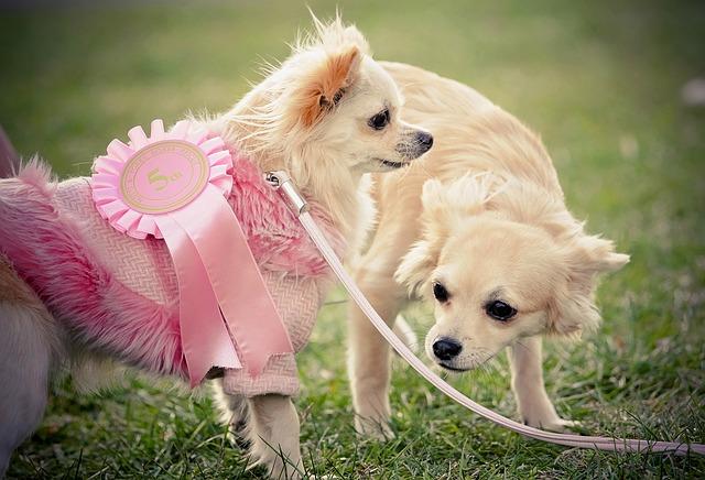 Bruceloza psów (Brucella canis)