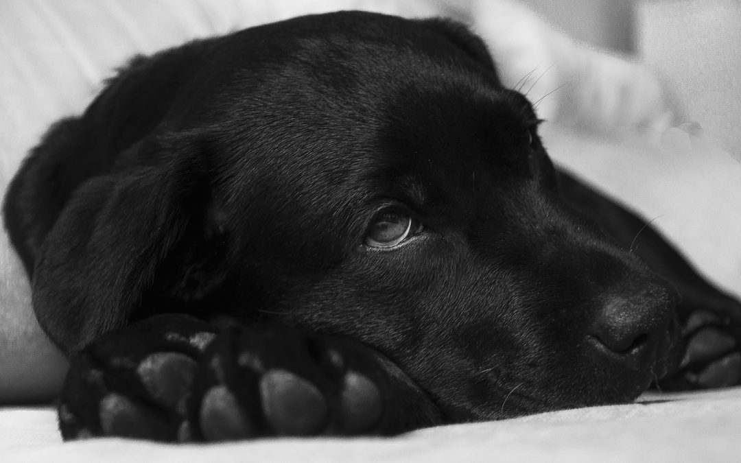Zapalenie pęcherza moczowego psów i kotów