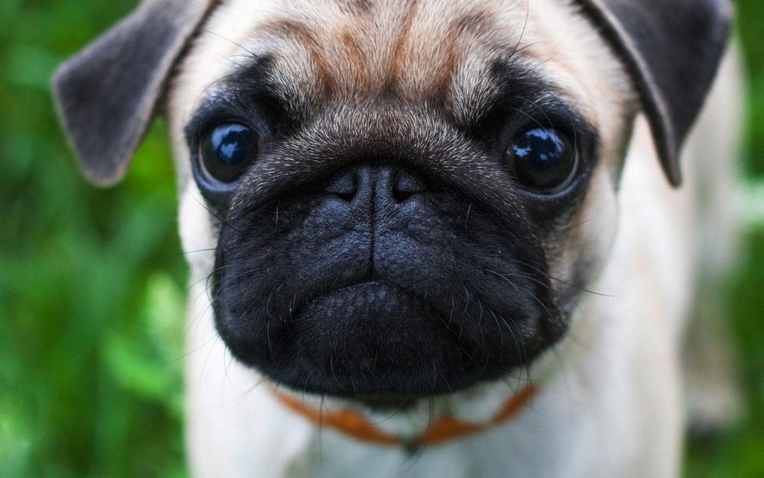 Dlaczego twój pies chrapie? Czy można temu zaradzić?