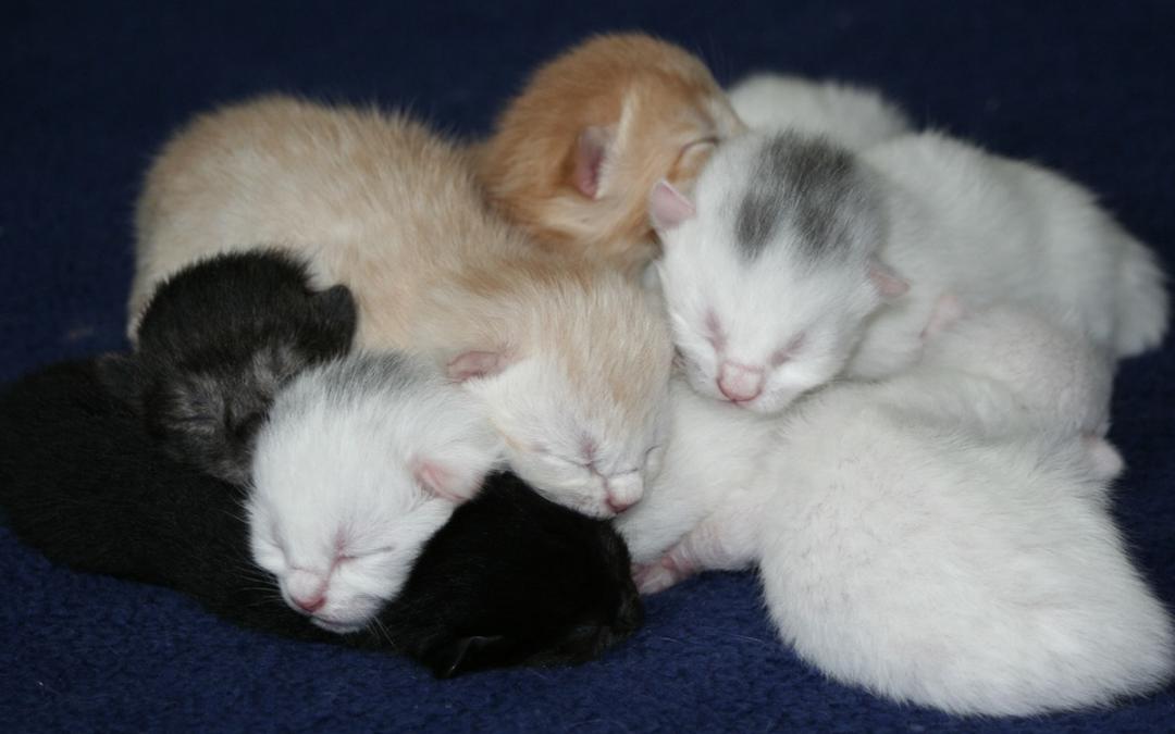 Antykoncepcja u suk i kotek – czyli jak bezpiecznie ograniczać płodność