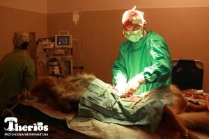 Dr Jacek Ingarden w czasie operacji. [ 5 / 7