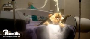Pacjent z zapadaniem tchawicy przygotowany do zabiegu. PO bokach stołu widoczny fluoroskop