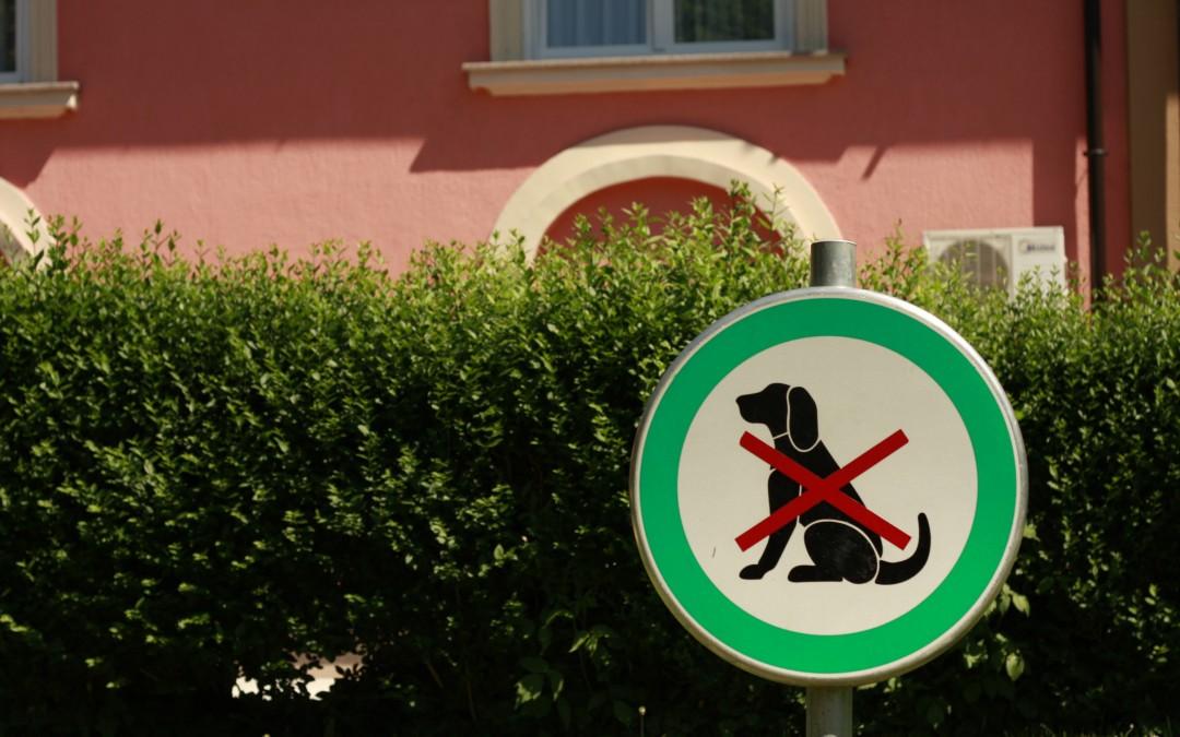 Czy mogę wejść z psem?