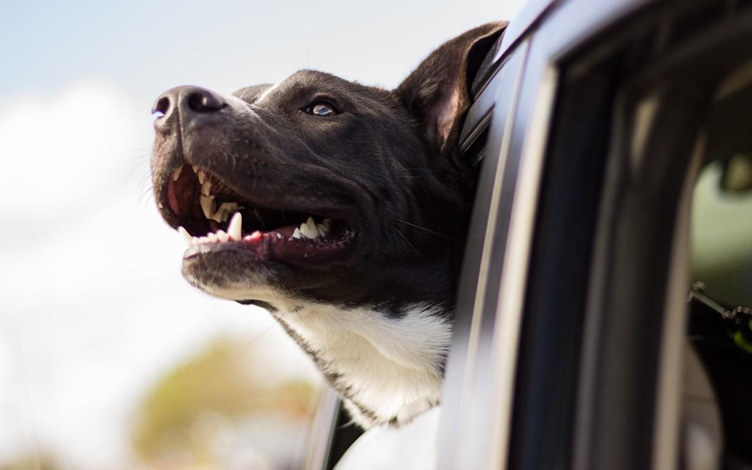 Podróż z psem środkami komunikacji miejskiej i nie tylko