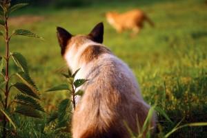 koty wychodzace