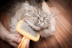 pielęgancja kota