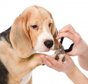 pielęgancja psa