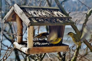 ptaki w zimie