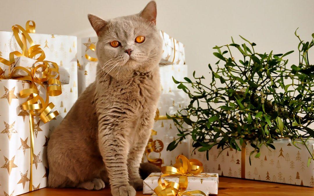 Święta z kotem – jak sprawić aby były bezpieczne?