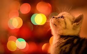 święta z kotem