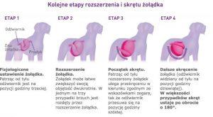 Skręt żołądka (RSŻ)