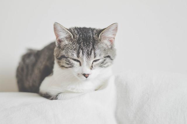 Białaczka kotów (Feline Leukemia Virus = FeLV)