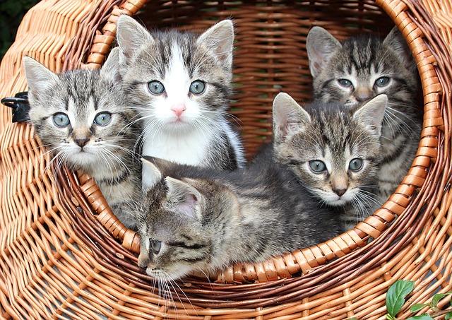 Białaczka kotów