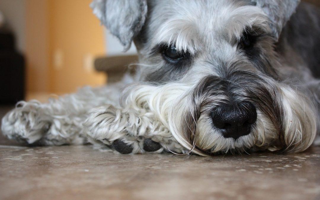 Wodonercze – czy pies/kot może żyć z jedną nerką?